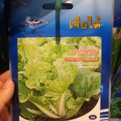 rau cải chinese cabbage