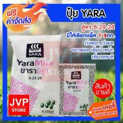 Yara Mila 8-24-24